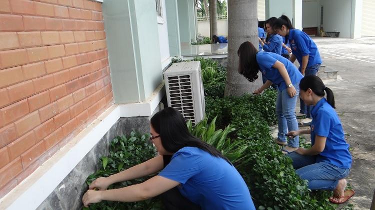 Đoàn viên Chi đoàn chăm sóc cây xanh, tỉa cây, nhổ cỏ